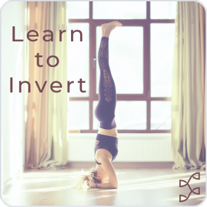 Learn to Invert